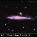 NGC 4631, Whale Galaxy, 5 Jun 2013,                                David Dearden
