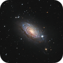 M63 the beautiful sunflower,                                Vincent F
