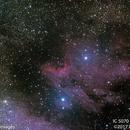 Pelican Nebula #2,                                Molly Wakeling