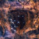 NGC2244 / Rosette Nebula Bi-Color,                                TomBramwell
