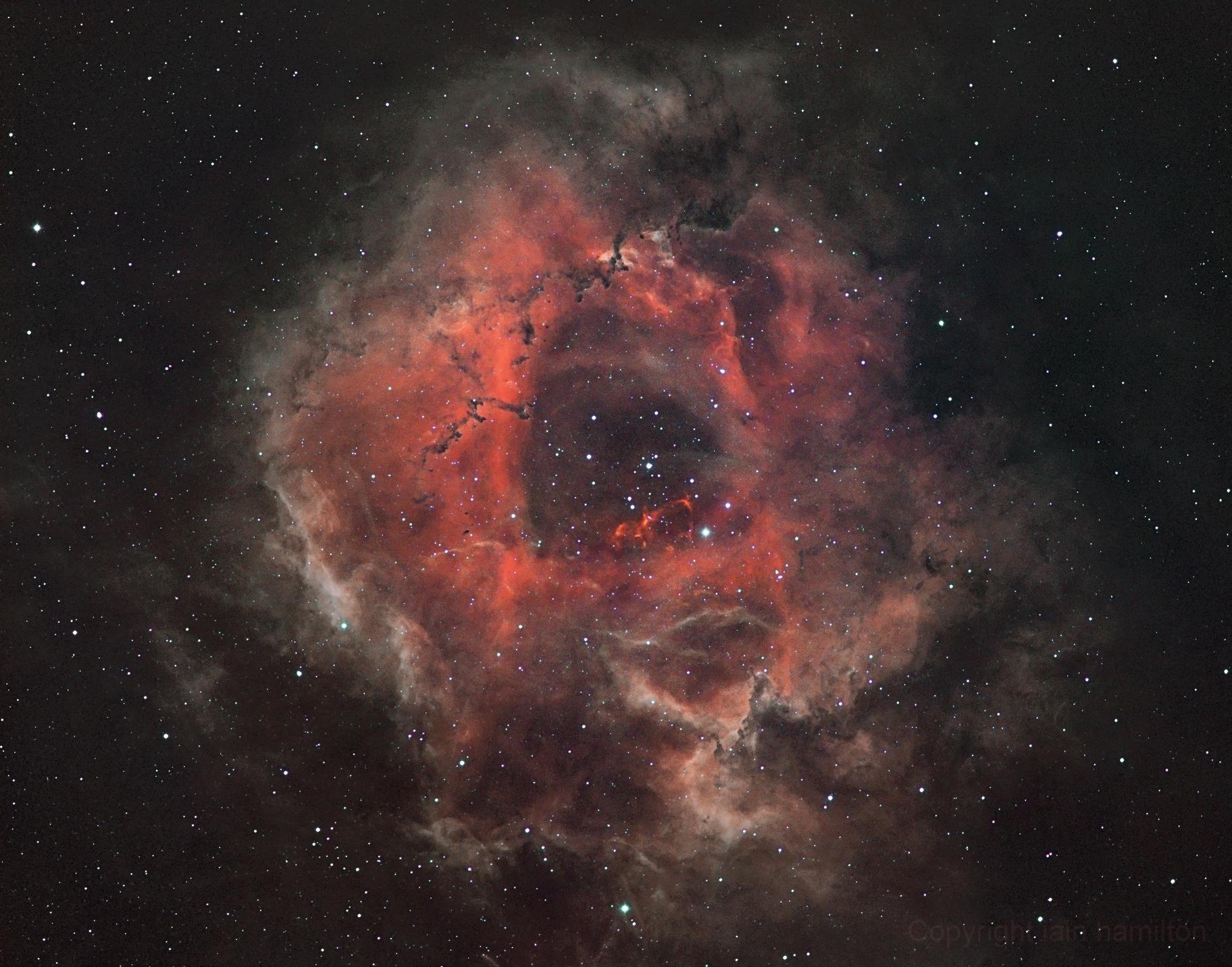 Rosette Nebula,                                Iain Hamilton