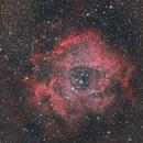 NGC2237 Rosette Nebula,                                KojiTajima
