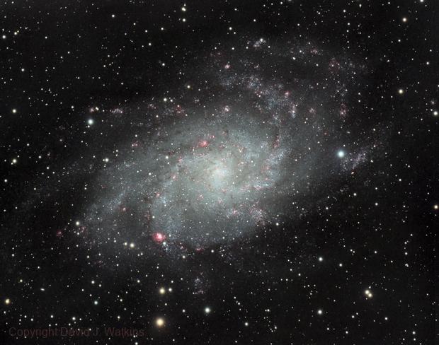 M33 Triangulum Galaxy,                                Dave Watkins