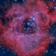 Rosette Nebula,                                Ricardo Pereira