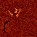 2020.06.09 Sun AR12765 H-Alpha,                                Vladimir