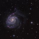 M101,                                avolight