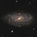 NGC 3953,                                Gary Imm