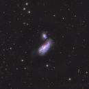 NGC4490,                                Andrei Ioda