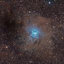 NGC 7023,                                Chris Plonski