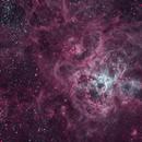 NGC 2070 - The Tarantula Nebula,                                Insight Observatory