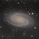 M81,                                Dan Wilson