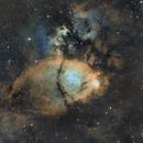 IC1795 SHO - Fish head,                                Le Mouellic Guillaume