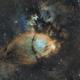 IC1795 SHO - Fish head,                                Le Mouellic Guill...