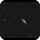 NGC 4559 and at least 40 other galaxies,                                Göran Nilsson