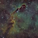 IC1396 in SHO,                                Piet Vanneste