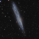 NGC 55,                                Giorgio Baj