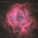 Rosette Nebula (NGC2237),                                David Feng