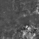 Widefield Cygnus,                                Dennis Sprinkle