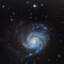 M101,                                Steve BENZ