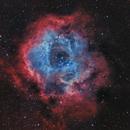 Rosette nebula,                                Fritz