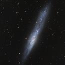NGC 55 - Whale Galaxy,                                Dhaval Brahmbhatt
