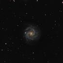 NGC3184 Little Pinwheel,                                magnuslar