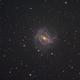 M83 - the Southern Pinwheel,                                Gianni Cerrato