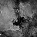 NGC7000,                                Dan Wilson