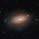 Messier 63 - The Sunflower Galaxy,                                Timothy Martin & Nic Patridge