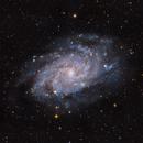 M33 - Triangulum Galaxy,                                Dan Gallo