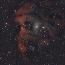 NGC 2175,                                adrian-HG