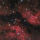 IC 1318/ Gamma Cygni Nebel,                                Felix D.