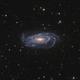 NGC 5033 - Waterbug Galaxy + NGC 5005,                                Robert Eder