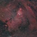Cone and Christmas tree nebulae,                                Jganz