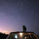 Meow,                                Kuan Chen