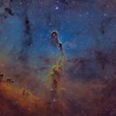IC 1396 The Elephant's Trunk Nebula,                                David Wills (Pixe...
