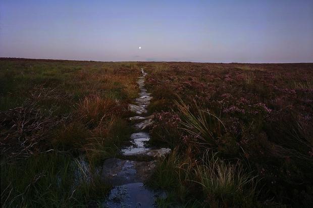 Moorland Moonrise I,                                Tristan Campbell