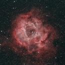 Rosette Nebula,                                Steve Willis