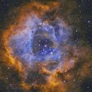 NGC2237 - Rosette Nebula - SHO,                                Dennis Sprinkle