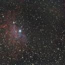 The Flaming Star Nebula,                                Zach Coldebella