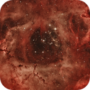 Rosette Nebula (HOO),                                Stuart Goodwin