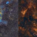 Ic1318 and NGC 6888,                                Fred Bagni