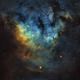 NGC7822 SHO,                                RJF-Astro