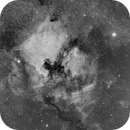 Ngc7000 & Pelican Nebula,                                S. DAVID