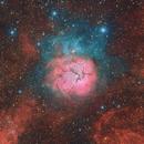 M20 - The Trifid Nebula,                                Tim Hutchison