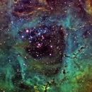 Rosette Nebula,                                Shailesh Trivedi