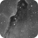 IC 1396A Elephant's trunk nebula,                                Rauno Päivinen