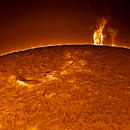 Solar Limb,                                sungazer
