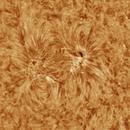 Solar active region 8/26/2018,                                Patrick Hsieh