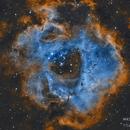 Rosette Nebula,                                Crisan Sorin